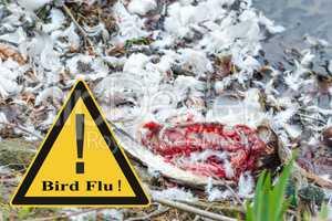 Symbolisch allgemeine Prävention gegen Vogelgrippevirus
