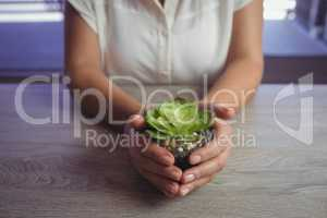 Mid section of woman holding plant