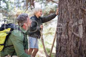 Father and son observing tree trunk in forest