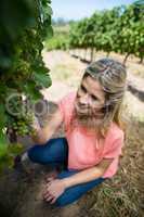 High angle view of smiling woman holding grapes at vineyard