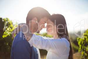 Side view of young couple embracing at vineyard