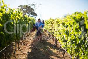 Man carrying his girlfriend amidst plants at vineyard