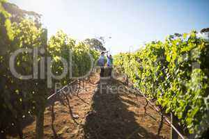 Distant view of couple dancing amidst plants at vineyard
