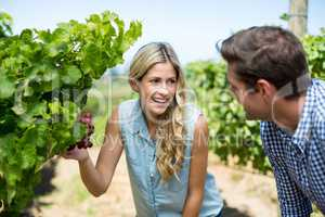 Happy couple looking at grapes growing at vineyard