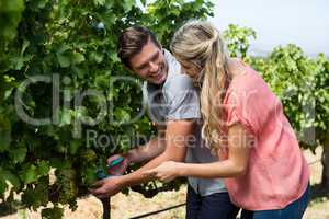 Smiling young couple using pruning shears at vineyard