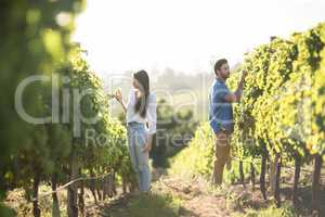 Man and woman standing by plants growing at vineyard