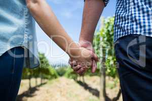 Mid section of couple holding hands at vineyard