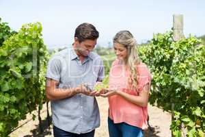Happy couple holding grapes and pruning shears at vineyard