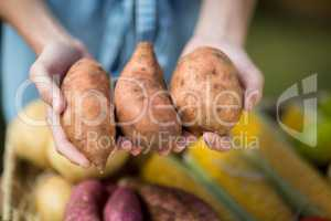 Cropped image of woman holding sweet potatoes