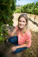 Portrait of woman holding grapes while crouching at vineyard
