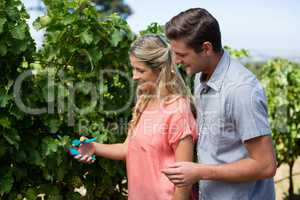 Happy couple using pruning shears at vineyard