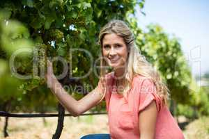 Portrait of smiling woman holding grapes growing at vineyard