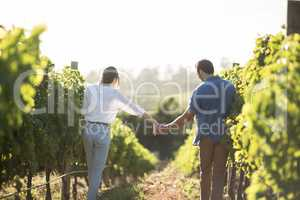 Rear view of couple holding hands at vineyard