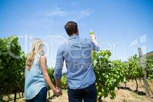 Low angle rear view of couple holding wineglass at vineyard