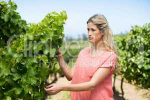 Thoughtful woman standing by plant at vineyard businessman analyzing adhesive notes