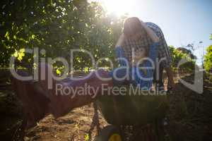 Young man pushing his happy girlfriend in wheelbarrow at vineyard