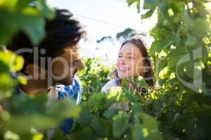 Happy couple seen through plants at vineyard