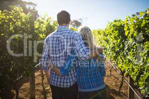 Rear view of couple embracing at vineyard during sunny day