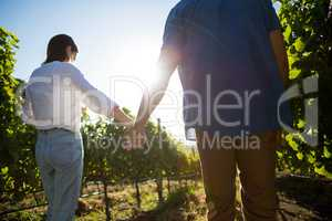 Low angle rear view of couple holding hands at vineyard