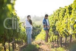 Man and woman standing by plants at vineyard