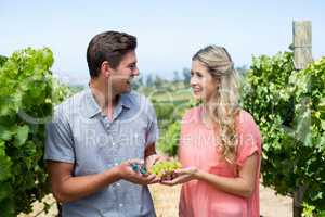 Smiling couple holding grapes and pruning shears at vineyard