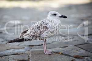 Gull stands on pavement