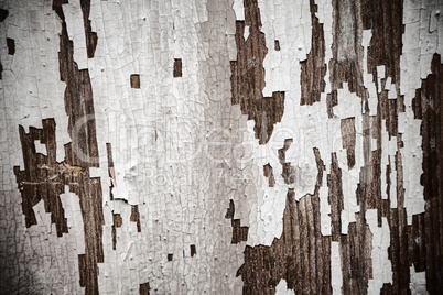 Old abstract background from the cracked paint