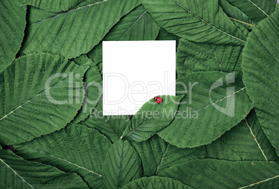 white blank sheet among the green leaves