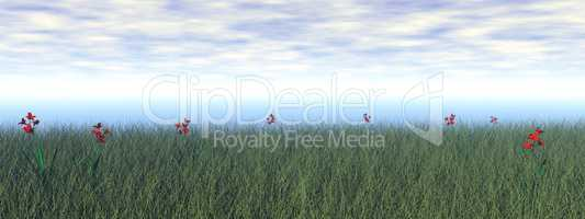 Grassland with flowers - 3D render