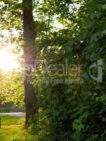 Sundown in forest