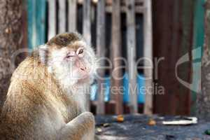Funny Monkey Portrait