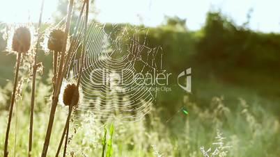 Summer Sunny Spider Web