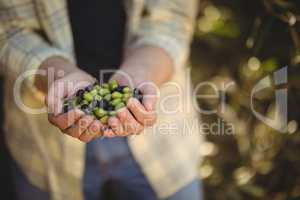 Mid section of man holding olives at farm