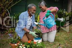 Smiling senior couple planting in backyard