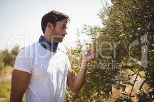 Man holding olive tree at farm on sunny day
