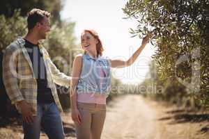 Woman holding olive tree while standing with boyfriend at farm