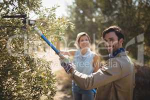 Man plucking olives with rake while standing by woman at farm