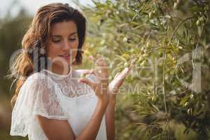 Beautiful young woman holding olive by tree at farm