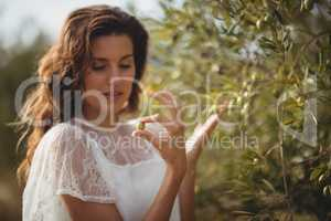 Beautiful young woman plucking olives from tree at farm