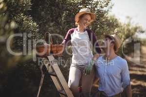 Cheerful couple with wicker basket and ladder at olive farm
