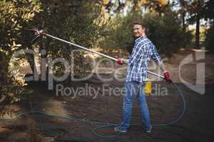 Smiling young man using olive rake at farm