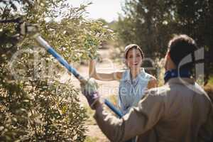 Man plucking olives with rake while talking to cheerful woman at farm