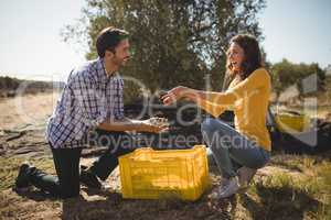 Young couple holding olives while kneeling at farm