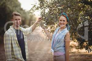 Portrait of couple holding olive tree while standing at farm