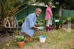 Portrait of senior couple working in backyard