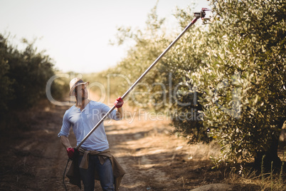 Man using rake for plucking olives at farm on sunny day