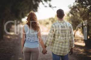 Couple holding hands while walking on dirt road at olive farm