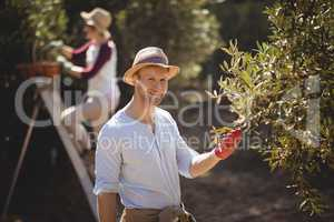 Smiling young man plucking olives with woman in background at farm