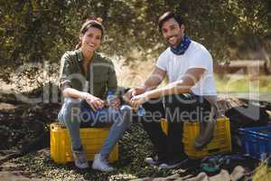 Smiling young couple sitting on crates at olive farm