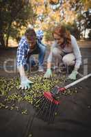 Man and woman picking olives at farm